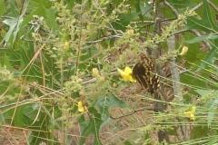Butterfly_@_Refuge