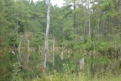 Carolina_Sandhills_Wildlife_Refuge